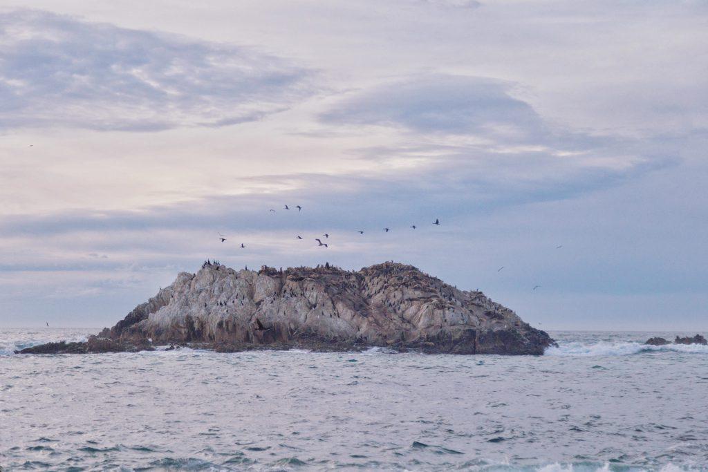Monterey (11)