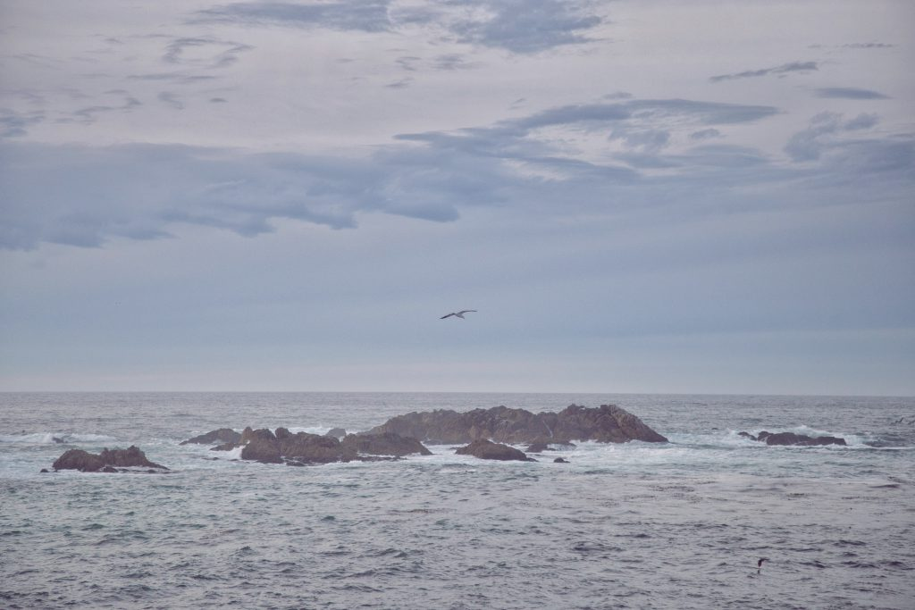 Monterey (9)
